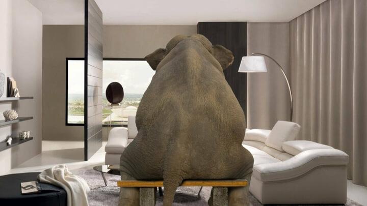 elephant Visit Florida